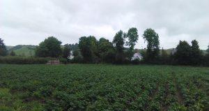crop-view